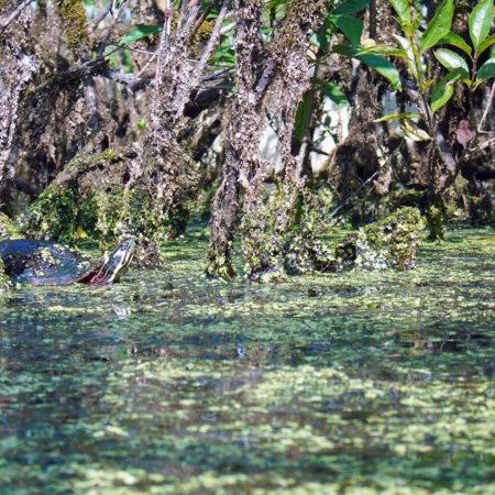 photography wildlife turtle